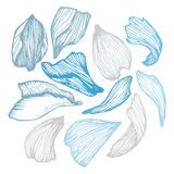 Hand drawn vector illustration - Collection of rose petals. Royalty Free Stock Photos