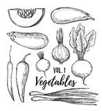 Hand drawn vector illustration - collection of vegetables vol.1. Pumpkin, eggplant, onion, pepper, turnip, radish, chili pepper.Design elements in sketch style royalty free illustration