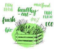 Hand drawn vector illustration - Fresh vegetables. Supermarket. Royalty Free Stock Photos