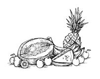 Hand drawn vector illustration - Fruits. Supermarket. Stock Photo