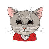 Hand-drawn vector illustration. Hipster cat in knitted sweater. Royalty Free Stock Images