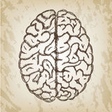 Hand drawn vector illustration - Human brain sketch  Stock Photo