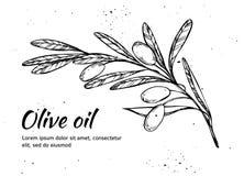 Hand drawn vector illustration - Olive branch. Olive oil. Vintage Stock Photo