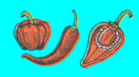 Hand drawn vector illustration of peppers set sketch style. Doodle vegetable. Elements Royalty Free Stock Photography