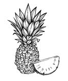 Hand drawn vector illustration - Pineapple. Exotic tropical fruit. Sketch. Outline. Perfect for. Packing, prints, invitations, greeting cards, posters, banners stock illustration