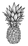 Hand drawn vector illustration - Pineapple. Exotic tropical fruit. Sketch. Outline. Perfect for tattooing, invitations, greeting. Cards, blogs, posters etc vector illustration