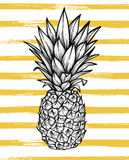 Hand drawn vector illustration - Pineapple with striped background. Exotic tropical fruit. Sketch. Outline. Perfect for. Invitations, greeting cards, blogs vector illustration