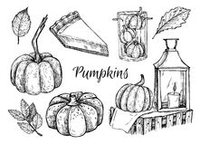 Hand drawn vector illustration - Pumpkins. Design elements Stock Photography