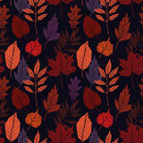 Hand drawn vector illustration. Seamless pattern with fall leave Stock Photo