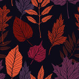 Hand drawn vector illustration. Seamless pattern with fall leave Royalty Free Stock Photography