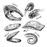 Hand drawn vector illustration - Set of seafood Vector Illustration