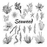 Hand drawn vector illustration - Set with seaweed. Sketch Royalty Free Stock Image