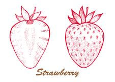 Hand drawn vector illustration -strawberry and in a section. Detailed vegetarian food. Elements collection for design. stock illustration