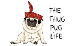Hand drawn vector illustration of thug pug puppy dog, sitting down with red western scarf bandana. And text stock illustration