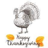 Hand drawn vector illustration of turkey to a Thanksgiving holiday. Stock Photography