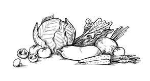 Hand drawn vector illustration - Vegetables. Supermarket. Royalty Free Stock Photos