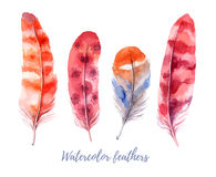 Hand drawn vector illustration - Watercolor feathers collection. Stock Images