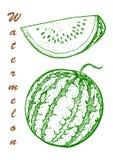 Hand drawn vector illustration - watermelon and slices. Botanical food illustration. royalty free illustration