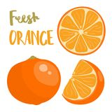 Hand drawn vector illustration of whole and sliced orange fruit. With lettering,  on white fon Stock Photography