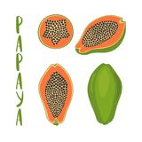 Hand drawn vector illustration of whole and sliced papaya with lettering. Isolated on white fon Stock Photo