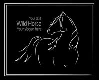 Hand drawn vector illustration of wild horse Royalty Free Stock Images