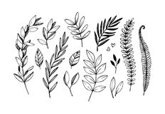 Hand drawn vector illustrations. Botanical branches of eucalyptus and fern. Floral design elements. Tattoo sketches. Perfect for. Weddng invitations, greeting royalty free illustration
