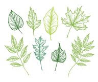 Hand drawn vector illustrations. Botanical clipart. Set of Green. Leaves, herbs and branches. Floral Design elements. Perfect for wedding invitations, greeting Stock Images