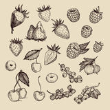 Hand drawn vector illustrations - Collection of berries Royalty Free Stock Photos