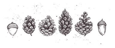Hand drawn vector illustrations. Collection of pine cones and ac Stock Image