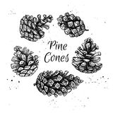 Hand drawn vector illustrations. Collection of pine cones. Royalty Free Stock Photo