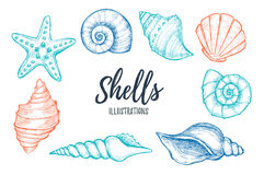 Hand drawn vector illustrations - collection of seashells.  Mari Stock Photos