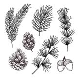 Hand drawn vector illustrations - Forest Autumn collection. Spru Stock Image