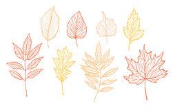 Hand drawn vector illustrations. Set of fall leaves. Forest desi. Gn elements. Hello Autumn Royalty Free Stock Photography