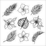 Hand drawn vector illustrations - tropical flowers and palm  Stock Photos