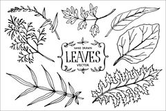 Hand drawn vector leaves. Stock Photos