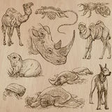 Hand drawn vector pack, line art - Animals Stock Images