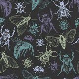 Hand drawn vector pattern with insects in different poses. Stock Photo
