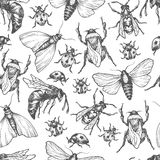 Hand drawn vector pattern with insects in different poses. Royalty Free Stock Photography