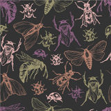 Hand drawn vector pattern with insects in different poses. Stock Image