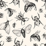 Hand drawn vector pattern with insects in different poses. Royalty Free Stock Photo