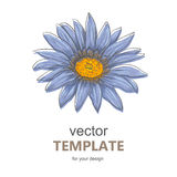 Hand drawn vector pen and ink illustration of Gerbera Daisy flower Stock Images