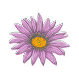Hand drawn vector pen and ink illustration of Gerbera Daisy flower Royalty Free Stock Image