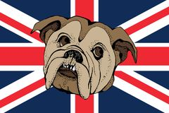 Hand Drawn Vector Portrait of Bulldog on a brittish flag. Hand Drawn Vector Portrait of dog Bulldog on a brittish flag. T-shirt graphics. Illustration for stock illustration