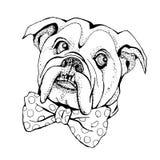 Hand Drawn Vector Portrait of dog Bulldog. T-shirt graphics. Illustration for fashion print, poster, textiles, fashion design stock illustration