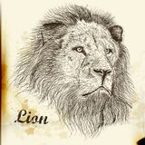 Hand drawn vector  portrait of lion Stock Photo