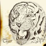 Hand drawn vector  portrait of tiger in vintage style Royalty Free Stock Image