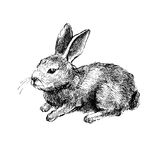 Hand drawn vector rabbit on white Royalty Free Stock Photography