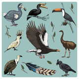 Hand drawn vector realistic bird, sketch graphic style, set of domestic. griffon vultures, cockatoo and broad-billed. Parrot. rhinoceros hornbill and extinct Royalty Free Stock Image