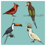 Hand drawn vector realistic bird, sketch graphic style, stock illustration