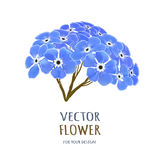 Hand drawn vector realistic illustration of Forget-me-nots flower Royalty Free Stock Photos